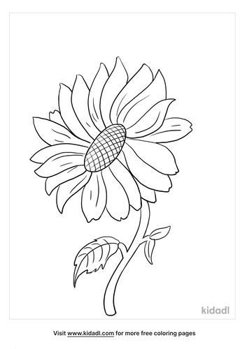 sunflower coloring page_2_lg.png