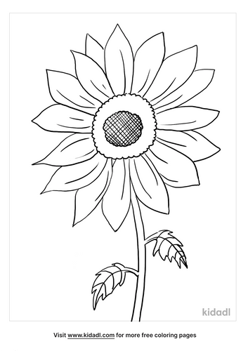 sunflower coloring page_5_lg.png