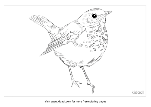 swainsons-thrush-coloring-page