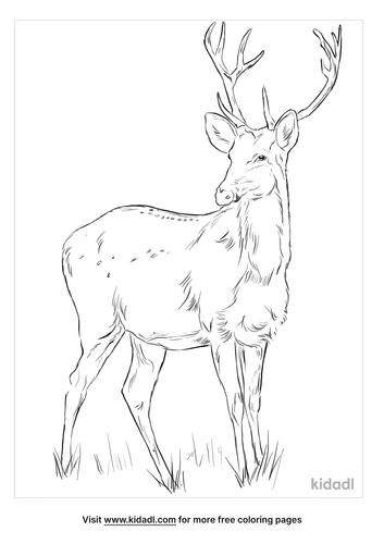 swamp-deer-coloring-page
