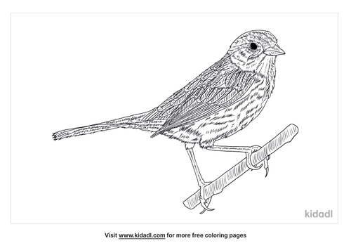 swamp-sparrow-coloring-page-1