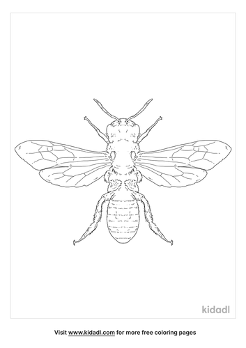 sweat-bee-coloring-page