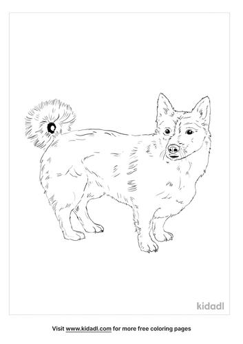 swedish-vallhund-coloring-page