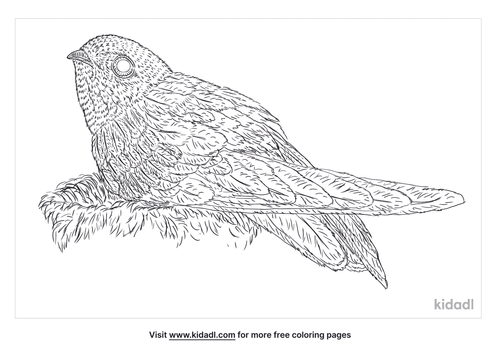 swiftlet-coloring-page