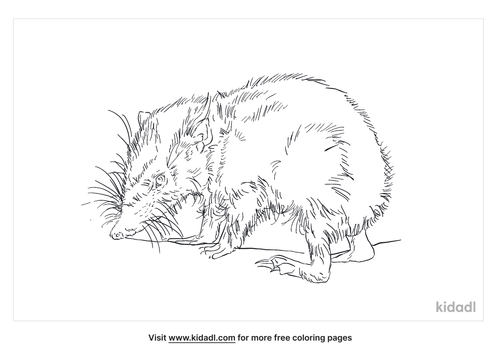 tailless-tenrec-coloring-page