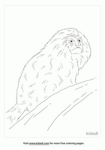 tamarin-coloring-page