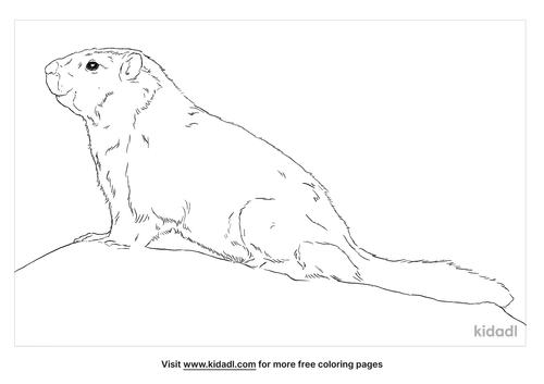 tarbagan-marmot-coloring-page