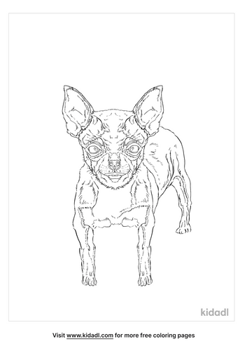 teacup-chihuahua-coloring-page