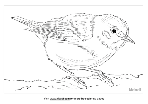 tennessee-warbler-coloring-page