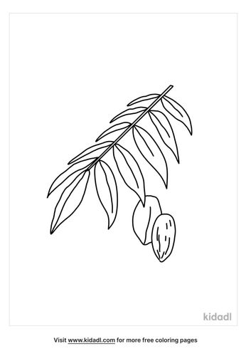 texas-pecan-nut-leaf-coloring-page.png