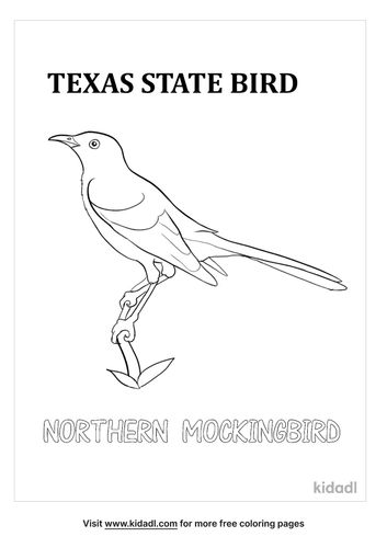 texas state bird coloring page-lg.jpg