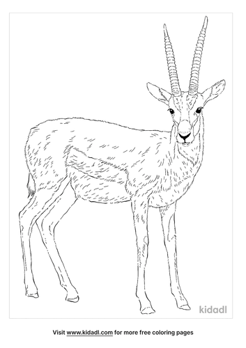 thomsons-gazelle-coloring-page