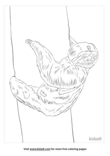 three-toed-sloth-coloring-page