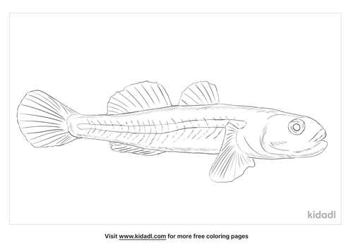 tide-water-goby-coloring-page
