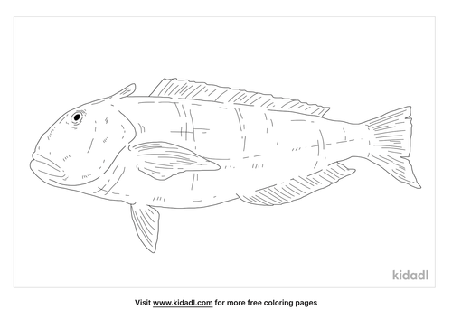 tilefish-coloring-page