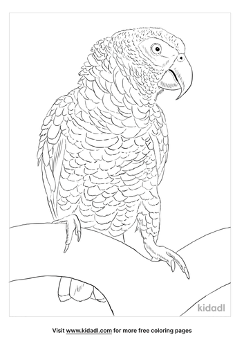 timneh-parrot-coloring-page