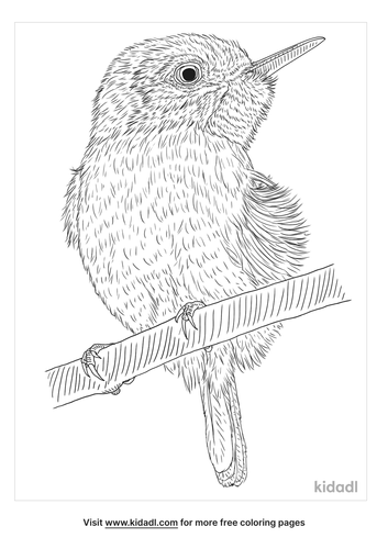 tody-coloring-page