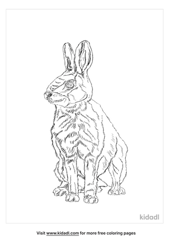 tolai-hare-coloring-page