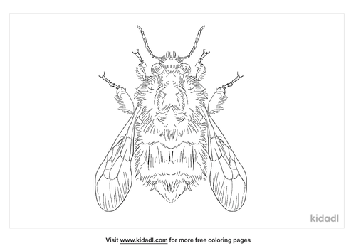 tree-bumblebee-coloring-page