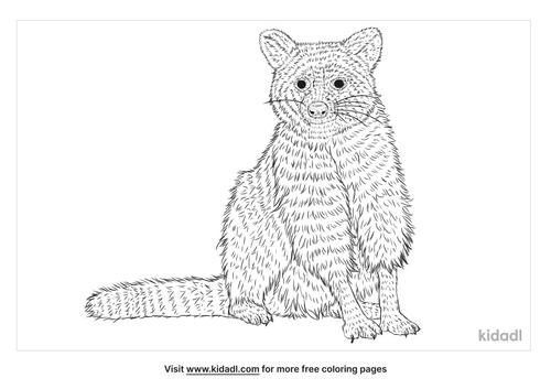 tres-marias-raccoon-coloring-page