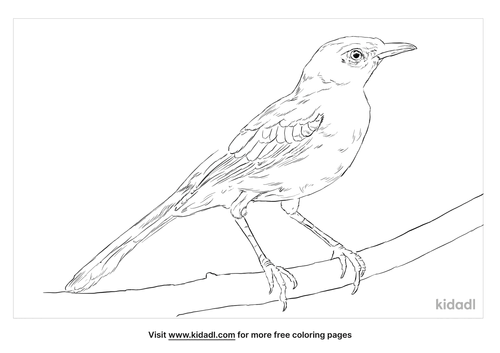 tropical-mockingbird-coloring-page