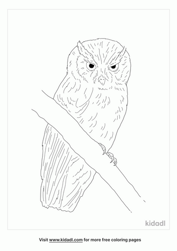 tropical-screech-owl-coloring-page