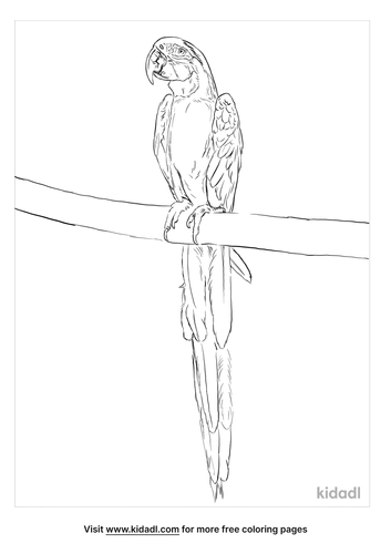 true-parrot-coloring-page
