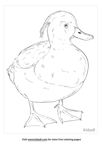 tufted-duck-coloring-page