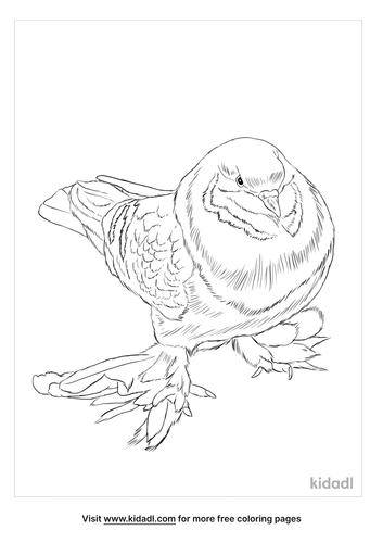 tumbler-pigeon-coloring-page