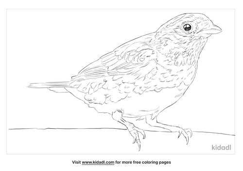 turquoise-tanager-coloring-page
