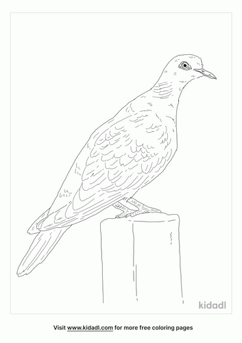 turtle-dove-bird-coloring-page