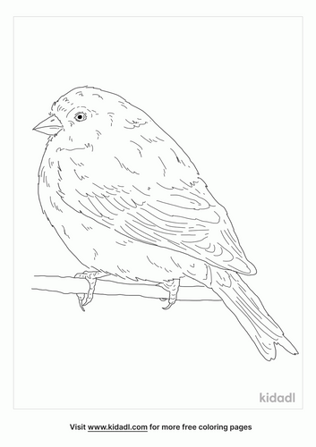 twite-bird-coloring-page