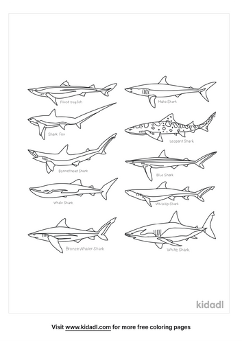 types-of-shark-coloring-page.png