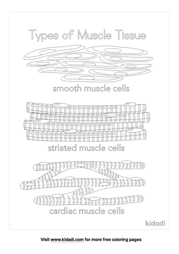types-of-tissues-coloring-page.png