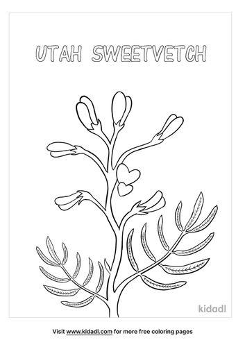 utah sweetvetch coloring page-lg.jpg