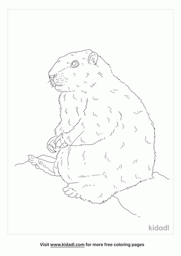vancouver-island-marmot-coloring-page
