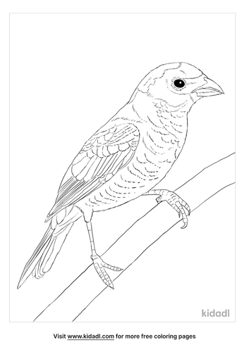 varied-bunting-coloring-page
