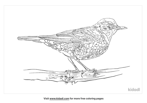 varied-thrush-coloring-page