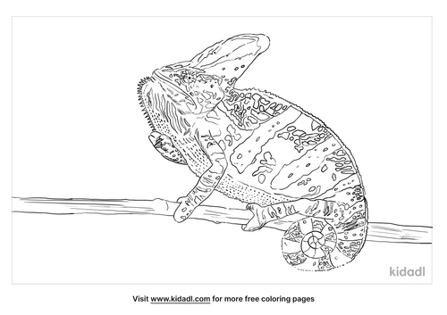 veiled-chameleon-coloring-page
