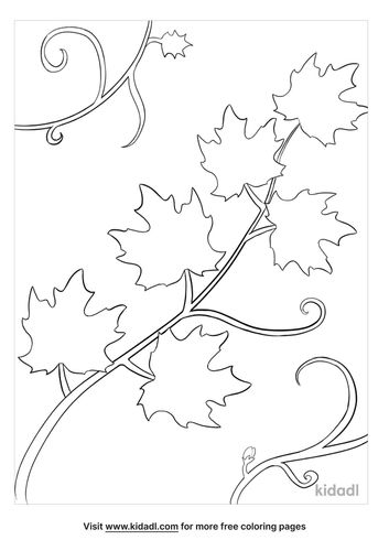 vine coloring pages-lg.jpg