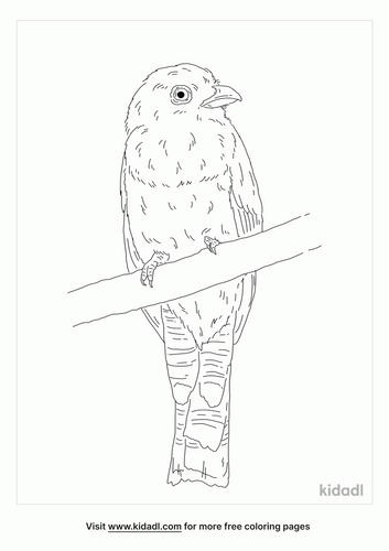 violaceous-trogon-coloring-page