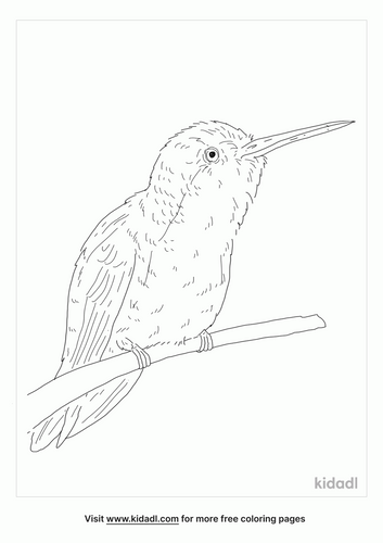 violet-crowned-hummingbird-coloring-page