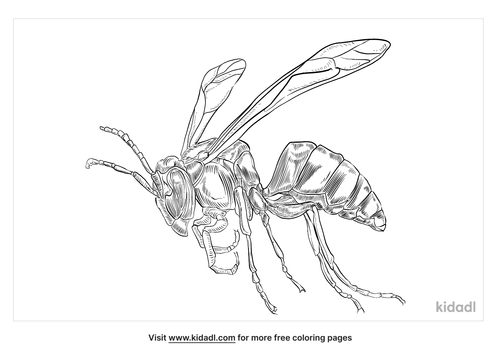 wasp-coloring-page