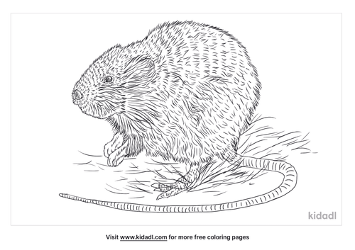 water-vole-coloring-page