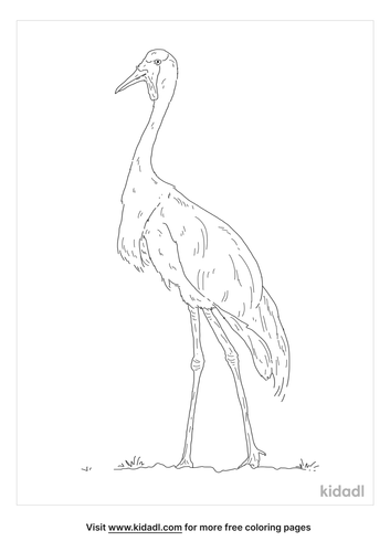wattled-crane-coloring-page