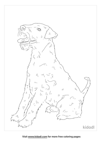 welsh-terrier-coloring-page