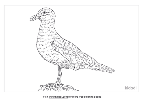 western-gull-coloring-page