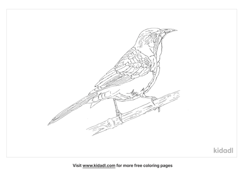 western-kingbird-coloring-page