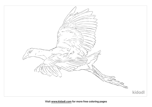 western-swamphen-coloring-page