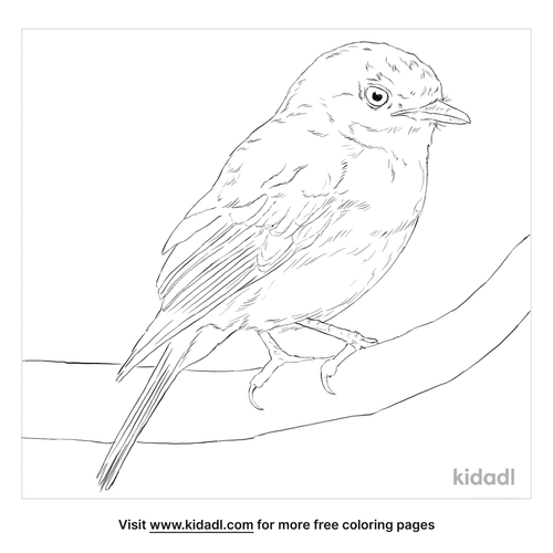 western-yellow-robin-coloring-page